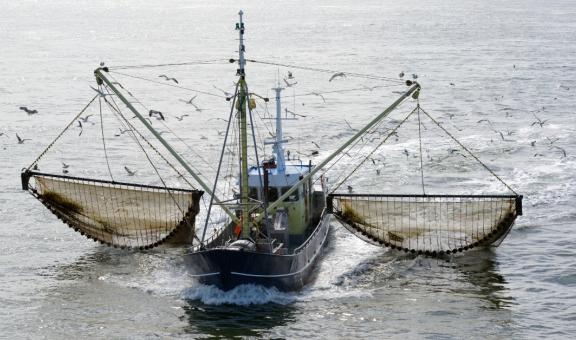 Fish behind net